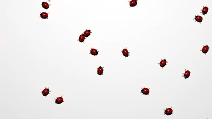 lady bugs crawling around on screen