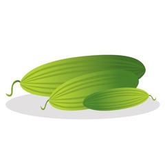 Cucumber vector illustration.