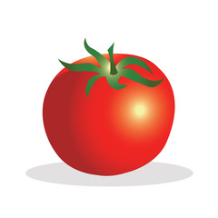 Tomato vector illustration.