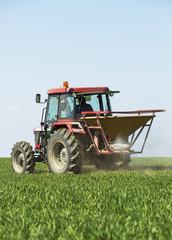 Farmer fertilizing wheat field with nitrogen