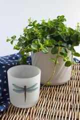 Dekoration Pflanze Teelicht