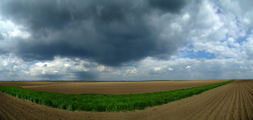 Panorama of spring wheat and arable land over stormy clouds