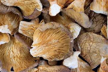 Close view of dried oyster mushrooms