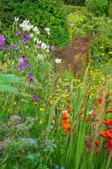 Gladiolen und Edelwicken am Gartenzaun