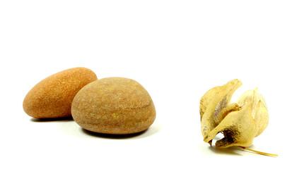 Steine mit Zierphysalis