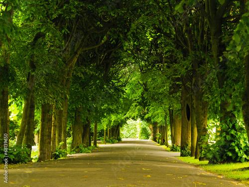 canvas print picture sidewalk walking pavement in park. nature landscape.