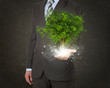 canvas print picture - Businessmen hold magical green tree and rays of light