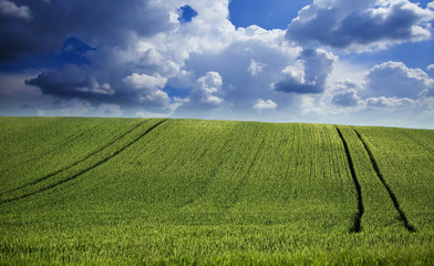 Green field of wheat over amazing cloudscape at spring
