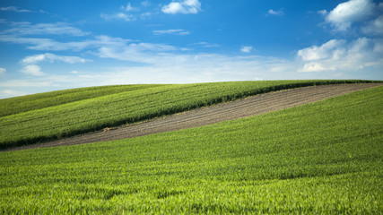 Wheat fields and arable land landscape with blue sky
