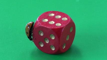 beautiful lady luck – ladybug ladybird on red dice