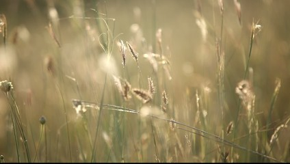 Autumn grass on outdoor