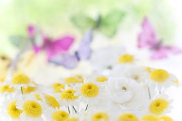 マーガレット 蝶々 春イメージ 春の野原