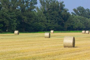 牧草ロールの畑