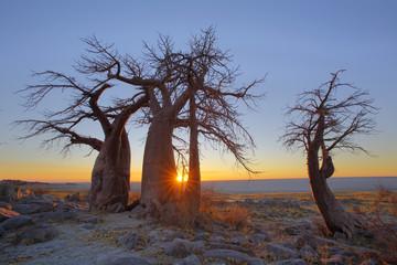 Sunrise at the Baobab's