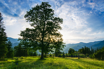 Carpathian mountain landscape with tree