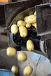 Kartoffeln fallen aus einer Waschanlage