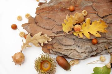 Acorns oak leaves