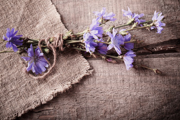blue chicory flowers on wooden background