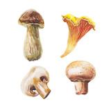 watercolor mushrooms set