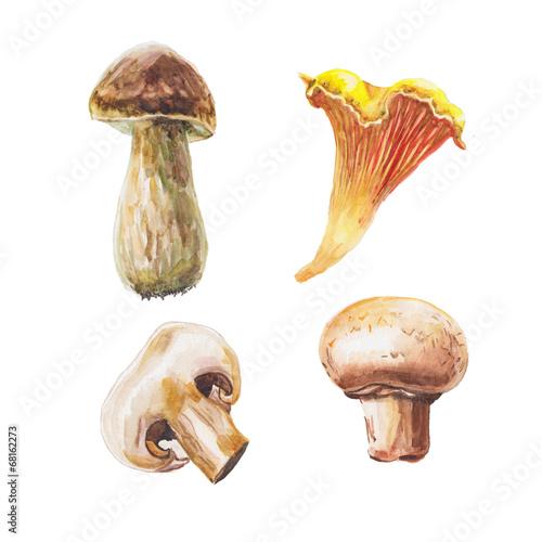 Leinwandbild Motiv watercolor mushrooms set
