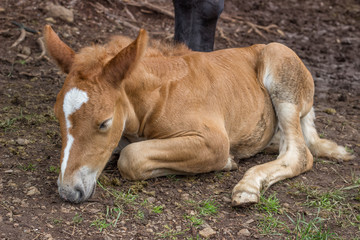 Foal sleeping and secure under his mom leg