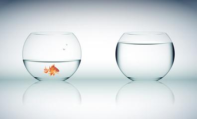 vetro, acqua, bicchiere, trasloco, siccità