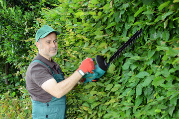 Gärtner schneidet Hecke mit Elektro-Heckenschere