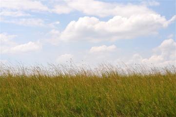 hohes Gras im Wind mit Wolkenhimmel
