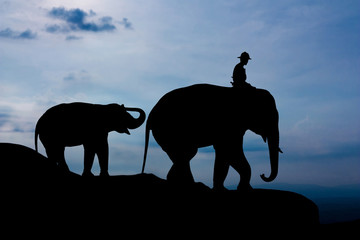 Elephant and baby on the mountain