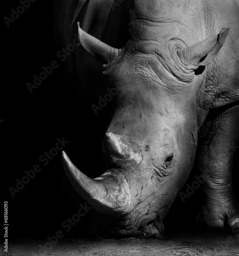 Canvas Zuid Afrika Rhino in Black and White