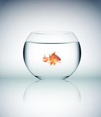 vetro, cristallo, acqua, pesce