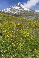 Bunte Blumenwiese in Südtirol, Italien