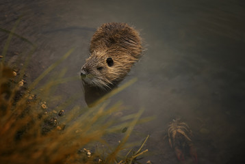 Little otter at the lake