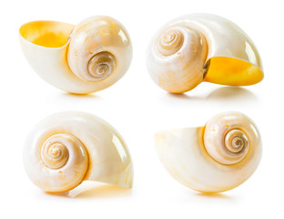 Sea shell group