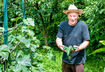Gardener with organic cucumbers