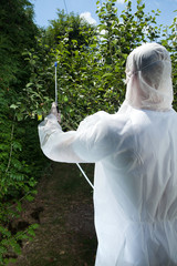 Spraying tree in a orchard