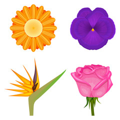 solid colors violet viola orange strelitzia gerbera flowers set