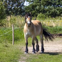 Horses in Suwalki Landscape Park, Poland.