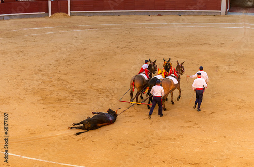 Canvas Stierenvechten Bullfight
