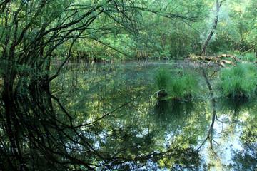 delta del po oasi di punta alberete