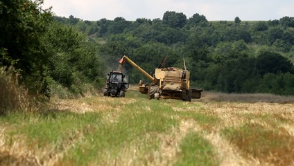 Combine loading tractor with harvesting grain