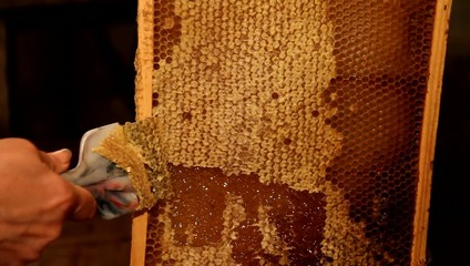 Beekeeper unseal honeycomb with knife to subtract honey