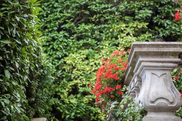 Flowers of Villa Carlotta on Lake Como