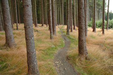bicycle path in forest