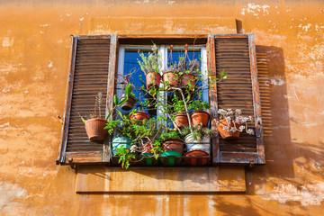 Fenster mit Blumentöpfen an einer alten Hauswand