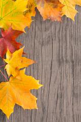 Herbst, Blätter, Ahorn, Holz, grunge, Hintergrund
