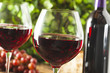 Refreshing Red Wine In a Glass - 68182809