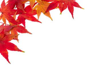rote Ahornblätter vor weißem Hintergrund