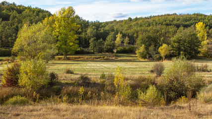 Paisaje con Valle y Bosque de Robles