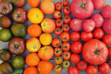 Rainbow from tomato.